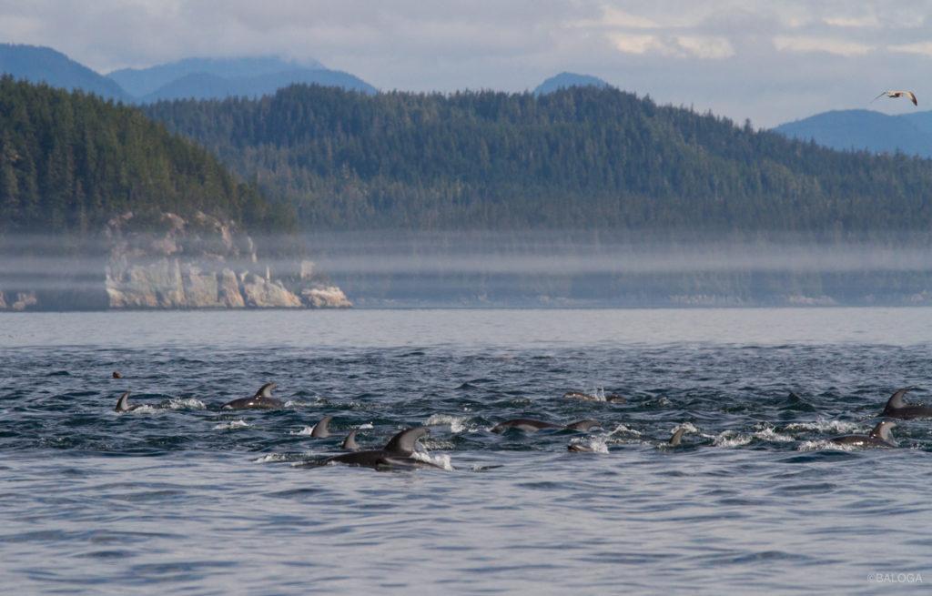 rencontre avec orques canada