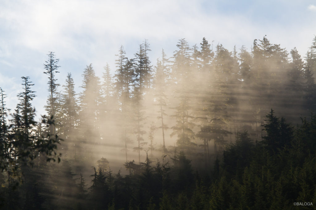 Baloga yoga retreat travel whales sunrise fog trees Pacific fjords ocean Vancouver Island BC northwest
